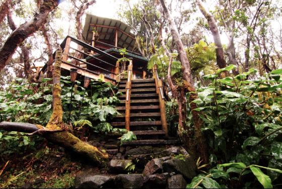 Treehouse-Hawaii